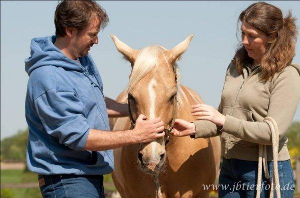 Gesunde Wirbelsäule beim Pferd Kurs