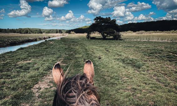 Ausritt mit Pferd im Recknitztal