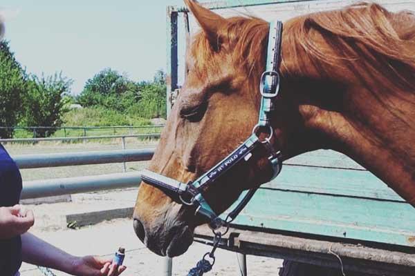Raindrop Technique beim Pferd Kurs