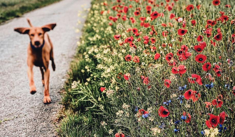 Urlaub mit Hund in Mecklenburg Vorpommern