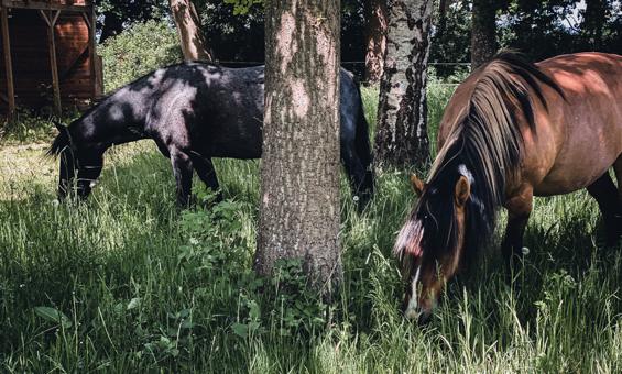 Unterkunft Pferde