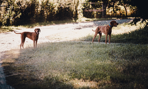 Urlaub mit Hund im Gutshaus